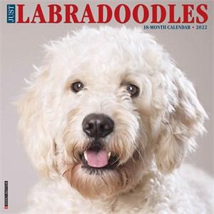 Labradoodles Calendar 2015