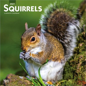 Squirrels Calendar 2015