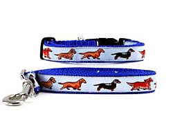 Dachshund Collar & Leash