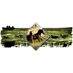 Horse T-Shirt - Scenic