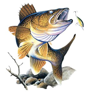 Walleye T-Shirt - Powerful