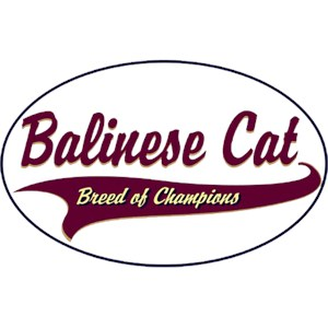 Balinese Cat T-Shirt - Breed of Champions