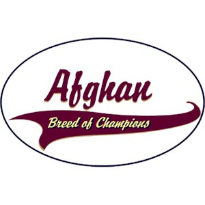 Afghan Hound T-Shirt - Breed of Champions