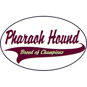 Pharaoh Hound T-Shirt - Breed of Champions