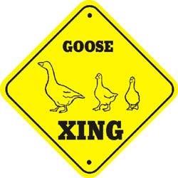 Geese Crossing