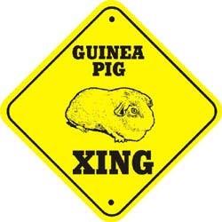 Guinea Pig Crossing