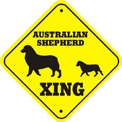 Australian Shepherd Crossing