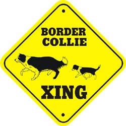 Border Collie Crossing
