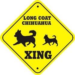 Chihuahua Crossing