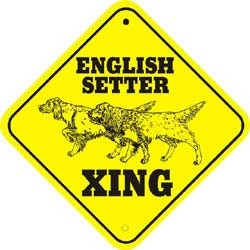 English Setter Crossing