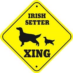 Irish Setter Crossing