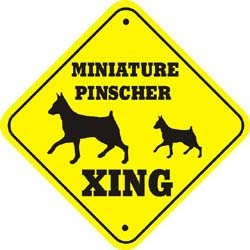 Miniature Pinscher Crossing