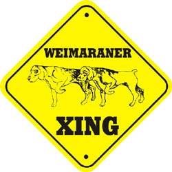 Weimaraner Crossing
