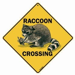 Raccoon Sign