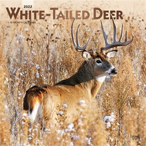 White-tailed Deer Calendar 2015