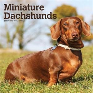 Miniature Dachshunds Calendar 2015