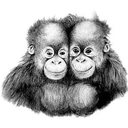 Orangutan T-Shirt - Twins