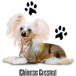 Chinese Crested T-Shirt - Stylin With Paws