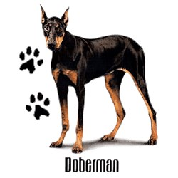 Doberman Pinscher T-Shirt - Stylin With Paws