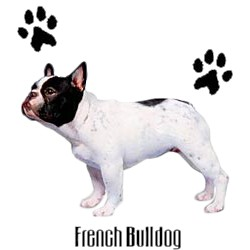 French Bulldog T-Shirt - Stylin With Paws