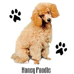 Poodle T-Shirt - Stylin With Paws