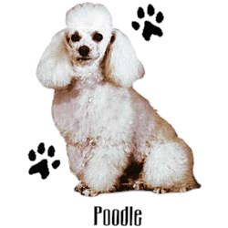White Poodle T-Shirt - Stylin With Paws