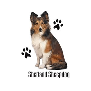 Shetland Sheepdog T-Shirt - Stylin With Paws