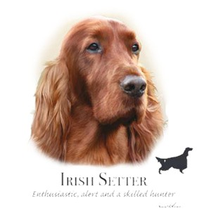 Irish Setter T-Shirt - Eye Catching