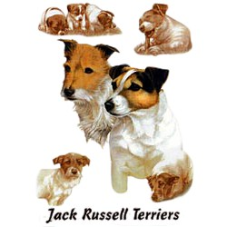 Jack Russell Terrier T-Shirt - Eye Catching