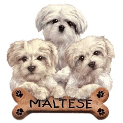 Maltese T-Shirt - Trio of Three