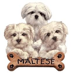 Maltese T-Shirt - Trio of Three