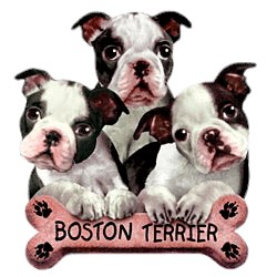 Boston Terrier T-Shirt - Trio of Three