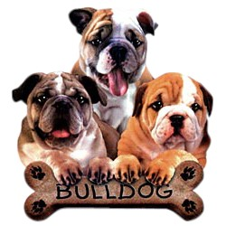 Bulldog T-Shirt - Trio of Three