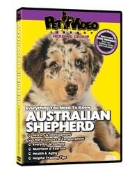 Australian Shepherd Video