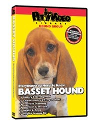 Basset Hound Video