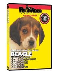 Beagle Video