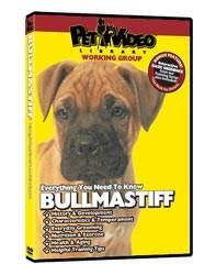 Bullmastiff Video