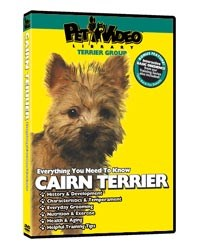 Cairn Terrier Video