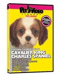 Cavalier King Charles Spaniel Video