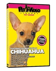 Chihuahua Video