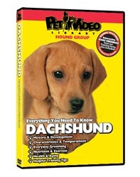 Dachshund Video