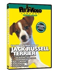 Jack Russell Terrier Video
