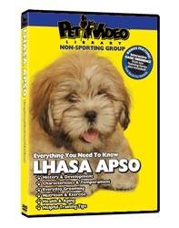 Lhasa Apso Video