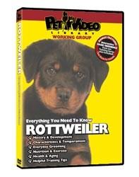 Rottweiler Video