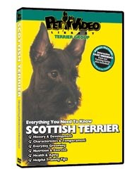 Scottish Terrier Video