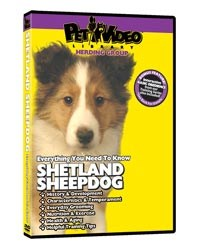 Shetland Sheepdog Video