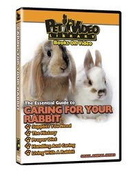 Rabbit Video