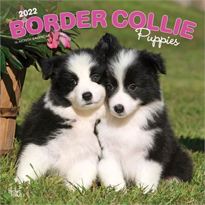 Border Collie Puppies Calendar 2014