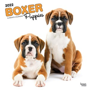Boxer Puppies Calendar 2014