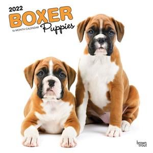 Boxer Puppies Calendar 2016